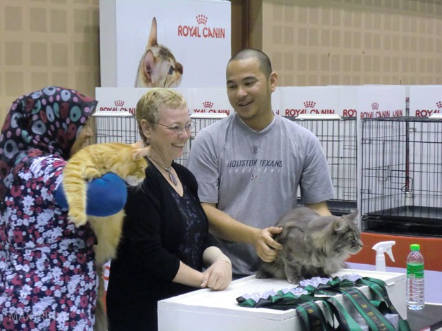 Siam Cat Show - выставка кошек в Чианг Мае, Таиланд 29-30 сентября 2012.